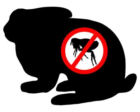 flea: Bunny flea prohibited
