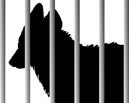 petting zoo: Jackal in zoo  Illustration