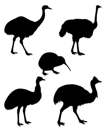 Las aves corredoras del mundo Foto de archivo - 11060490