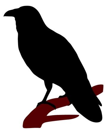 Raven Silhouette photo