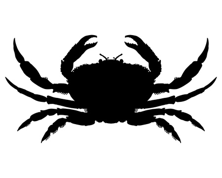 Crab Silhouette photo