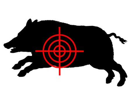 wildschwein: Boar Fadenkreuz Illustration