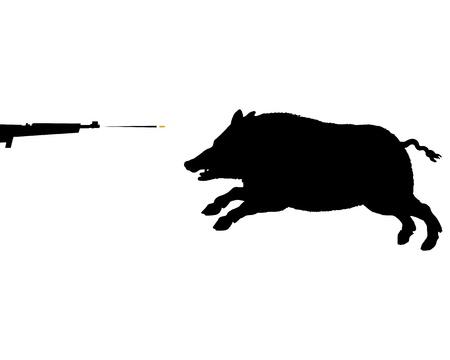 sighting: Boar hunting