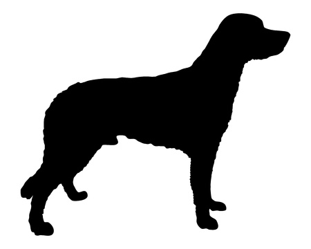 pointer dog: Small M�nsterl�nder Illustration
