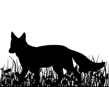 Fox in the meadow Vector