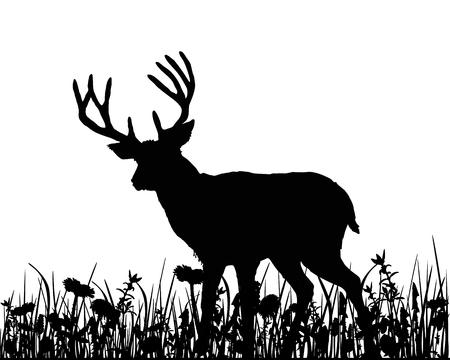 cervidae: Deer in the meadow Stock Photo