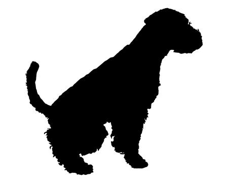 welsh: Welsh Terrier Stock Photo