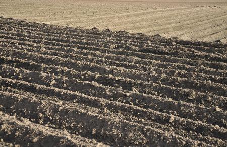 prepared potato: Prepared potato field Stock Photo