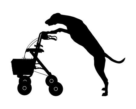 dog walker: Dog pushes rollator
