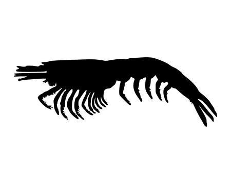 krill: Krill on white