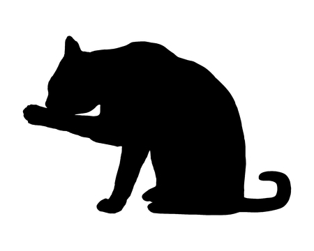 animal silhouette: Cat on white