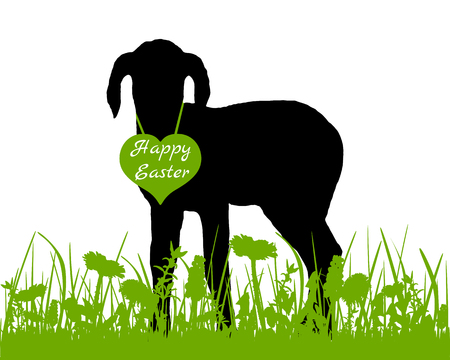lambkin: Lamb on meadow Illustration