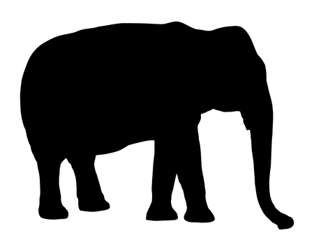 Olifant op wit Stock Illustratie