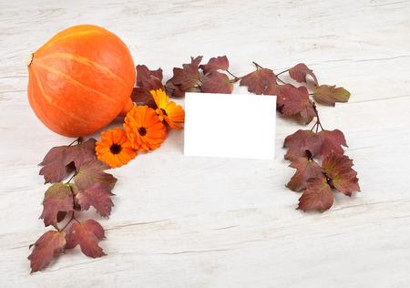 describable: Pumpkin background