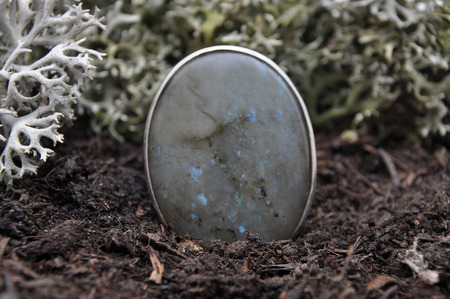 labradorite: Labradorite on forest floor