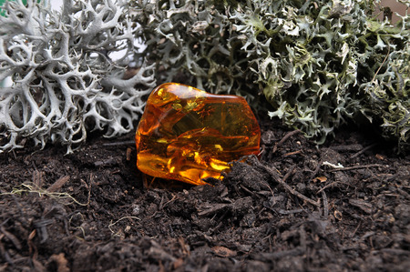 inclusions: Amber on forest floor Stock Photo