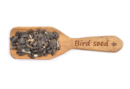 Bird seed on shovel Stock Photo