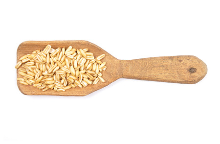 Oat on shovel