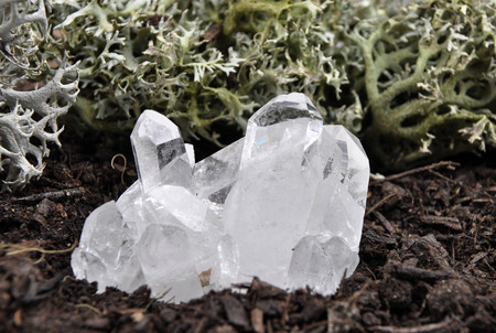 quarz: Rock crystal on forest floor Stock Photo