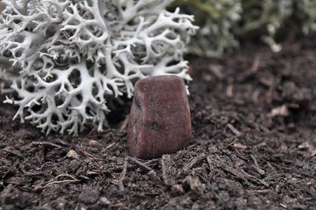 quarz: Enstatit on forest floor