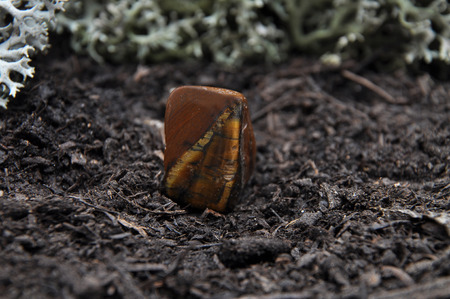 quarz: Tigers eye on forest floor Stock Photo