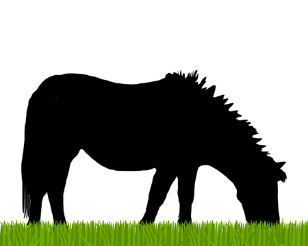 grazing: Pony grazing