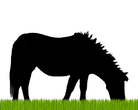 sward: Pony pascolo
