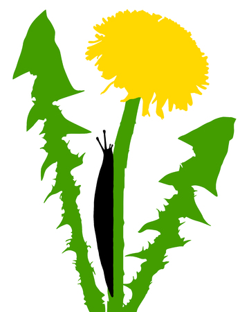 vermin: Slugs on dandelion