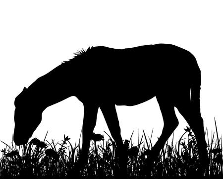 Coalt on meadow Illustration
