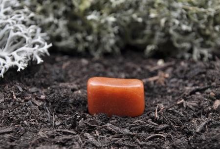 quarz: Avenutrin on forest floor