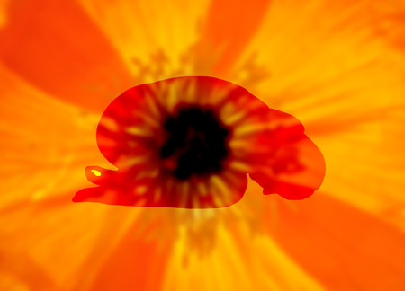 papaver: Background blurry with woman doing yoga