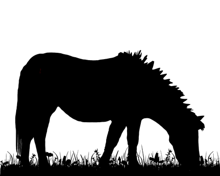 sward: Pony grazing