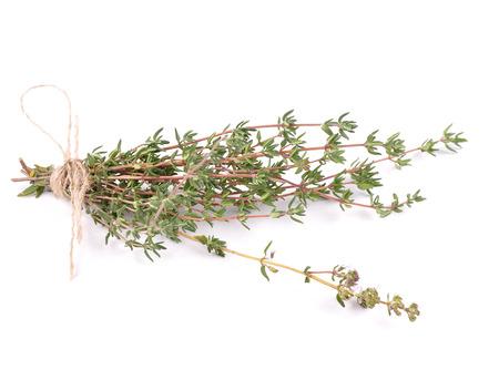 Thymus stems on white