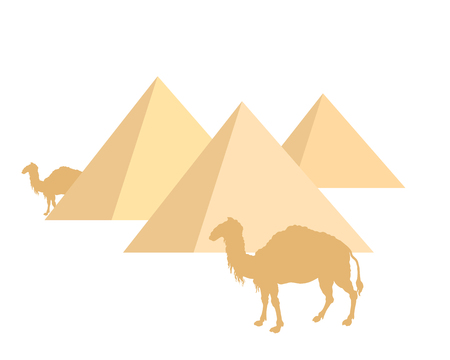 Camels and pyramids on white Vector illustration.