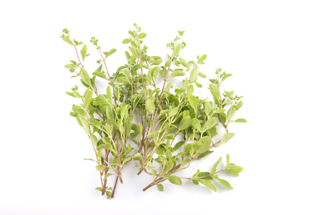 Marjoram on white background