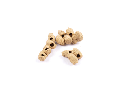 Brood cells of potter wasps on white Stock Photo
