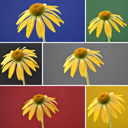Collage yellow coneflower on background stock photo picture and collage yellow coneflower on background stock photo 96822516 mightylinksfo