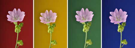 Collage Musk mallow on variegated background 스톡 콘텐츠
