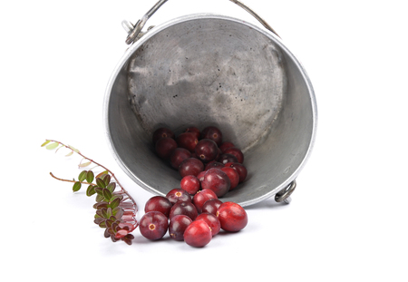 Cranberries with twig and tin bucket on white Stock Photo