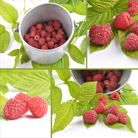 Collage red raspberries with tin bucket and leaves on white