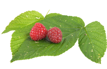 Red raspberries with leaves on white