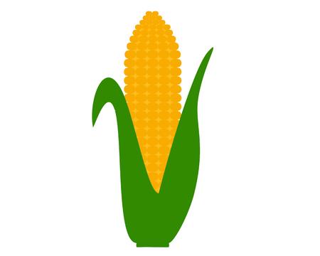 Corn cob on white