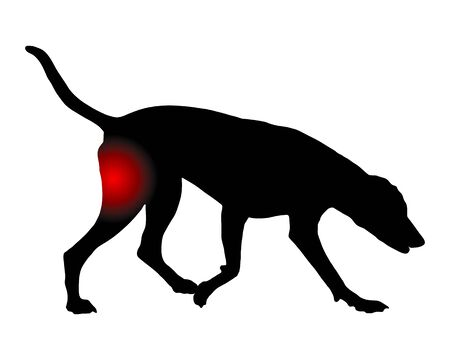 Dog with pain in the hind leg