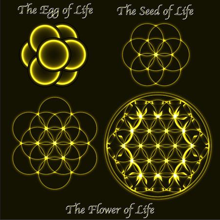 Brass vector flower of life evolution, egg, seed, sacred geometry symbols