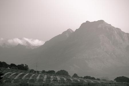 ケープタウンのぶどう畑の黒と白山