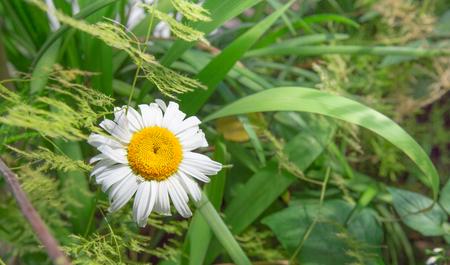 明るい白と緑に囲まれた黄色の花 写真素材