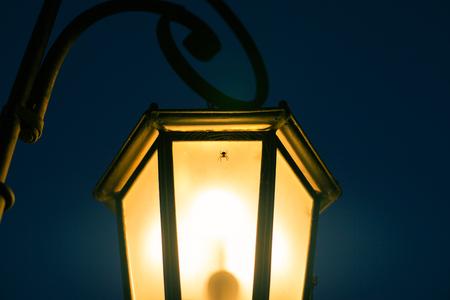 街灯のウェブ上の小さなクモ 写真素材