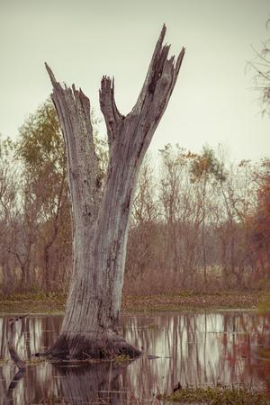 テキサス州の国立公園の湖の枯れ木 写真素材