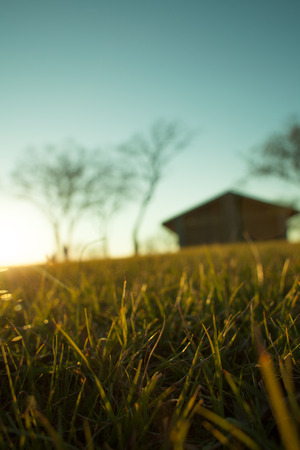 barns winter: Glowing Grass at Sunset with Out of Focus Building Stock Photo