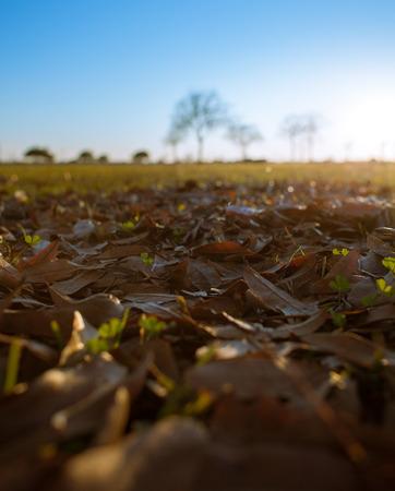 夕暮れ時の公園で芝生の上の落ち葉